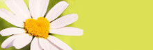 Green Panoramic Banner With A Daisy In The Shape Of A Heart, Love Concept