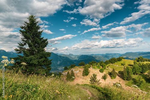 Fotografie, Obraz  Sunny alpine meadow