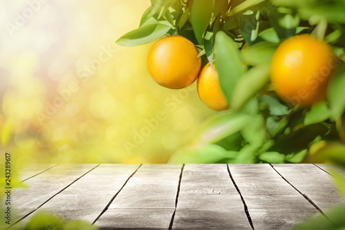 Vászonkép wooden table top and free space for text with orange fruits tree  background