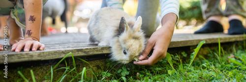 Plakat Szeroki widok wizerunek ręka dziecka karmienia zwierzęcia domowego dziecka królik