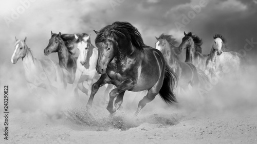 Horse herd run gallop in desert dust against dramatic sky. Black and white