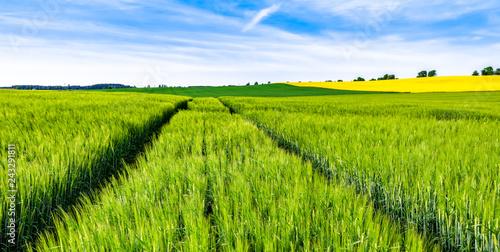 Foto auf AluDibond Pistazie Green field of wheat growing in spring, farm landscape