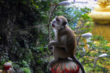 Monkey Sitting On A Pole With ...