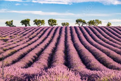 Montage in der Fensternische Lavendel Parc naturel régional du Verdon, Valensole, champ de lavande