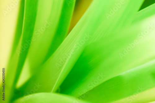 Closeup nature green for background/texture leaf blurred and green natural plants branch in garden at summer under sunlight concept design wallpaper view with copy space add text. #243315450