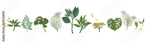 Fototapety, obrazy: green forest fern