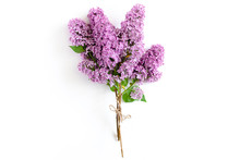 Bouquet Of Lilac Tied With Twine