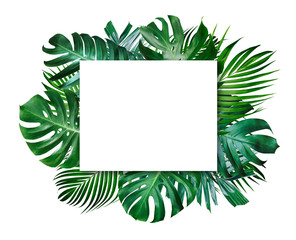 Summer tropical leaves and blank frame with copy space on white background
