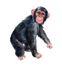 Сhimpanzee Monkey Colorful Is...