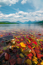 Colorful Pebbles And Autumn Leaf In Lake McDonald, Glacier National Park, Montana, USA