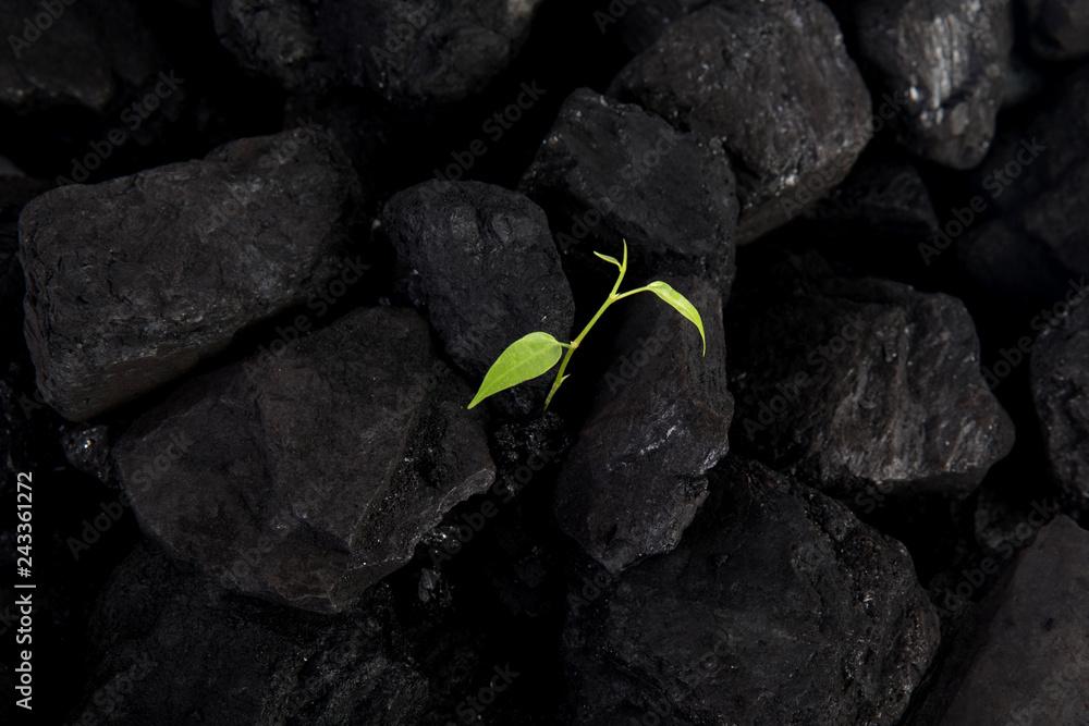 Fototapeta Carbon neutral, CARBON FOOTPRINT