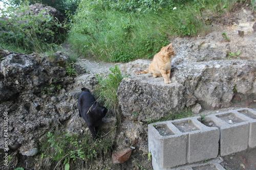 Fotografie, Obraz  Katzen sitzen auf Mauer