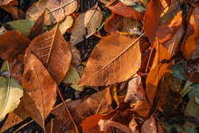 Close Up Of Autumn Leaves In Field