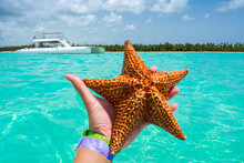 Hand Holding Carribean Starfish With Catamaran And Turquoise Water In The Background