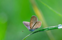 Close-up Of Butterfly Perching On Grass