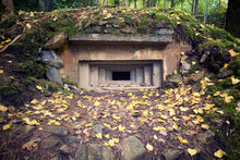 View Of Bunker In Forest During Autumn