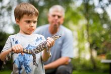 Boy Holding Baby Alligator