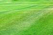 Leinwanddruck Bild - Close-up of a green lawn on a wavy glade, a hilly green field on a sunny day.