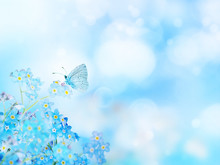 Blue Forget-me-not Flowers And Butterfly Blurred Background