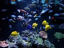 Aquarium Feeding Frenzy