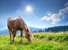 Brown Horse With Light Mane On Green Pasture In The Mountains