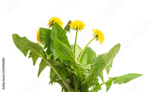 Photo  dandelion flower isolated