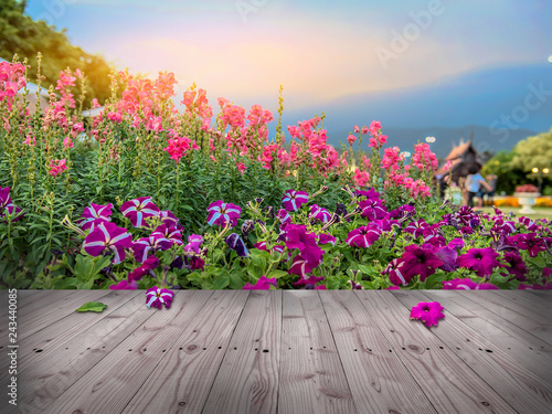 Fotografia, Obraz  wooden floor with Beautiful Colourful flowers in public royal park , sunset in