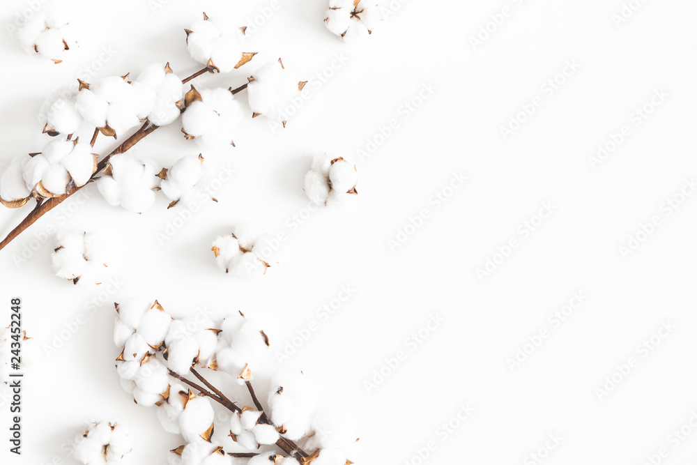 Fototapety, obrazy: Flowers composition. Cotton flowers on white background. Flat lay, top view, copy space
