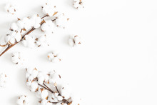Flowers Composition. Cotton Fl...