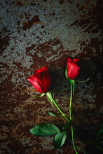 Red Roses With Dark Background