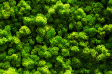 Top View Green Moss For Background Texture Close Up