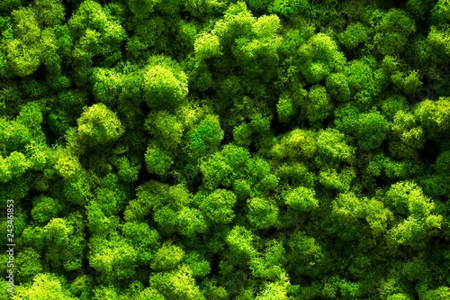 fototapeta na lodówkę top view green moss for background texture close up