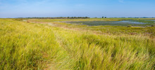 Panorama Of Salt Marsh And Tid...