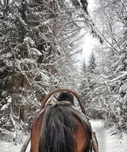 Horse Running With The Winter Sleigh On The Road