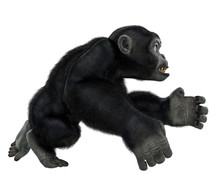 Baby Chimpanzee Cartoon In A W...