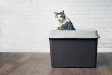 Cute Tabby Cat Looking Curious...