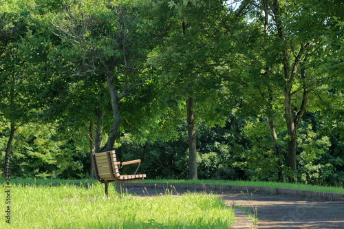 Valokuva  初夏の公園