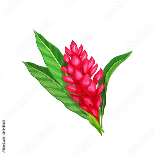 Ginger flower, tropical flower Wallpaper Mural
