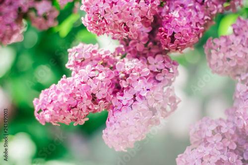Cadres-photo bureau Jardin Lilac, Mother's Day, Valentine's Day, International Women's Day