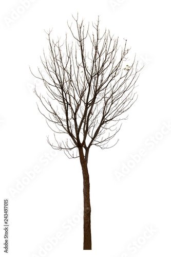 Dead tree isolated on white background Suitable for use  - Buy this