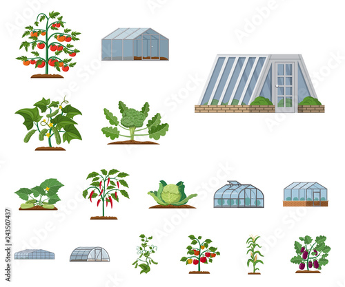 Canvas-taulu Isolated object of greenhouse and plant symbol