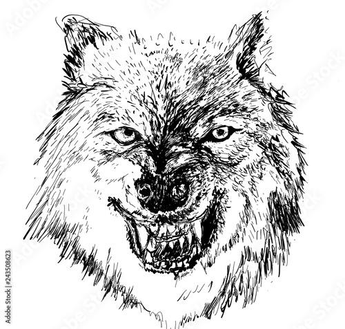 Deurstickers Hand getrokken schets van dieren wolf head hand drawn illustration,art wall inspiration