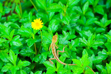 Lizard On Green Plant Yellow F...