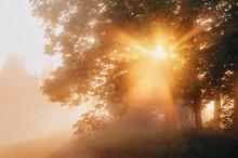 Beautiful Natural (summer) Bac...
