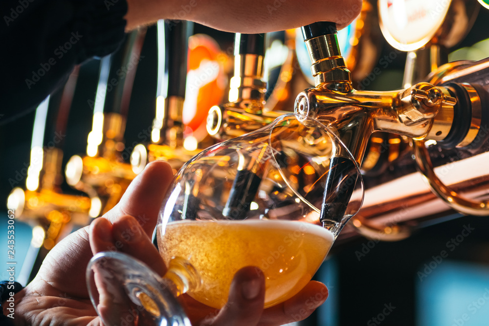Fototapety, obrazy: Hand of bartender pouring a lager beer in tap