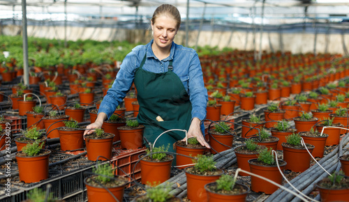 Fotografia, Obraz Young female gardener in apron working with  seedlings of oregano  in pots
