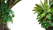 canvas print picture - Nature frame of jungle trees with tropical rainforest foliage plants (Monstera, bird's nest fern, golden pothos and forest orchid) growing in wild isolated on white background with clipping path.