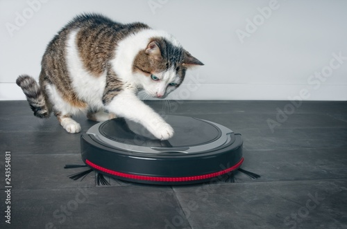 Photo  Funny tabby cat playing with a robot vacuum cleaner.