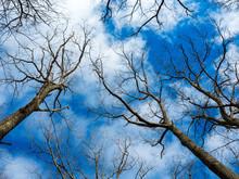 Tree And Blue Sky