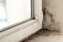 Mold On The Slope Near The Window